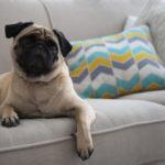 Limpeza apartamento com cachorro